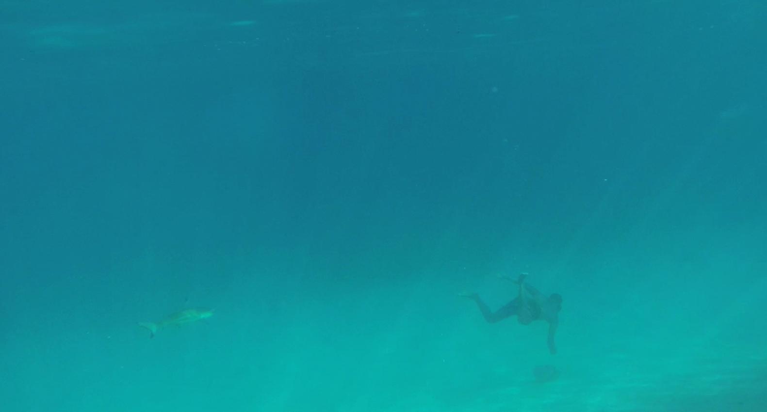 moorea-tahiti-treasure-garrett-gee-shark