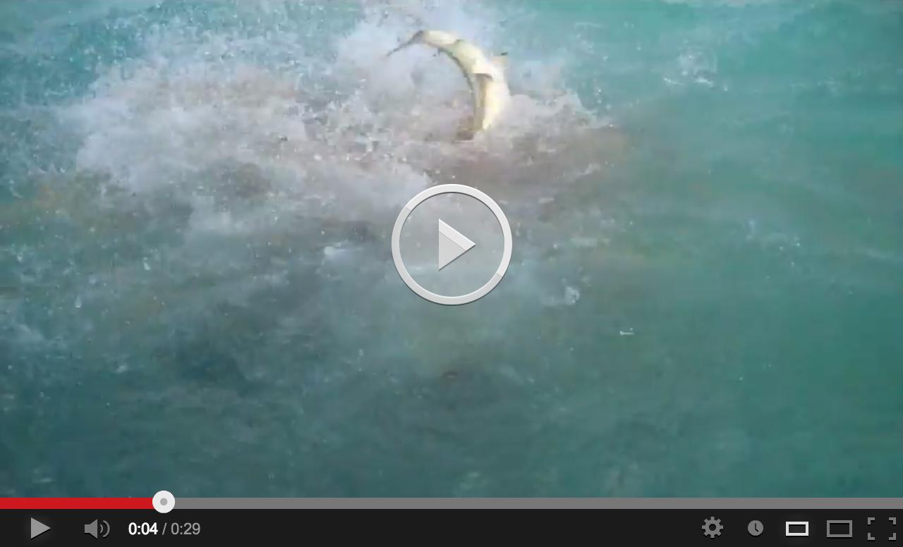 Tahiti Shark Attack