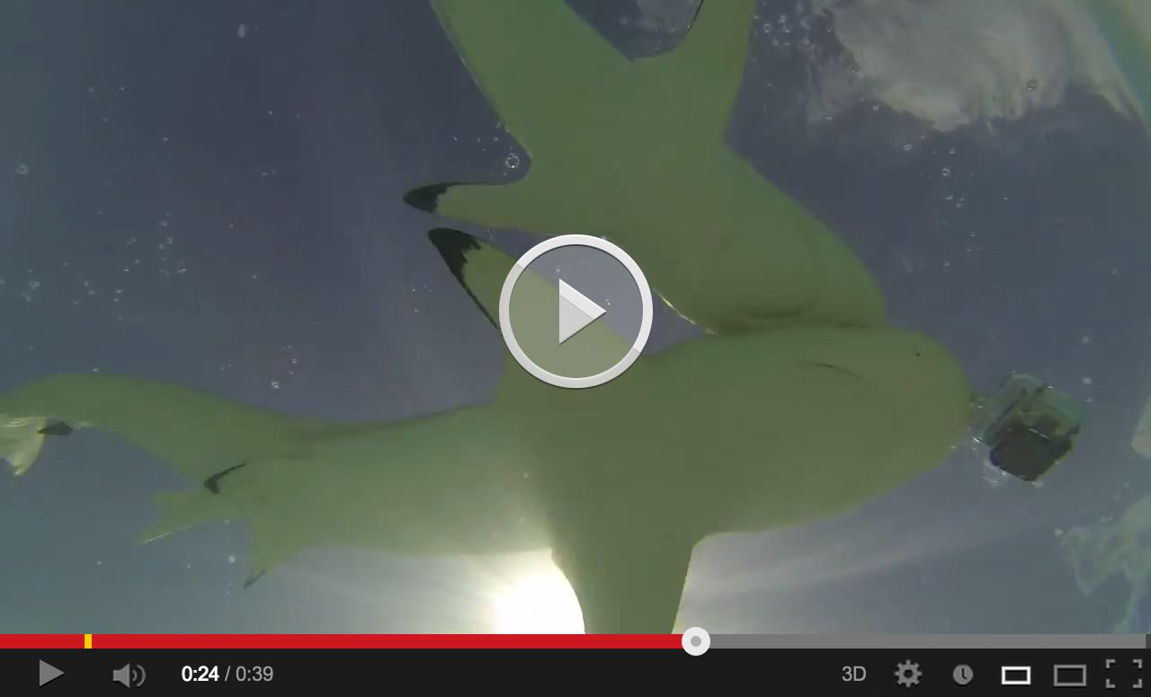 Shark eating gopro