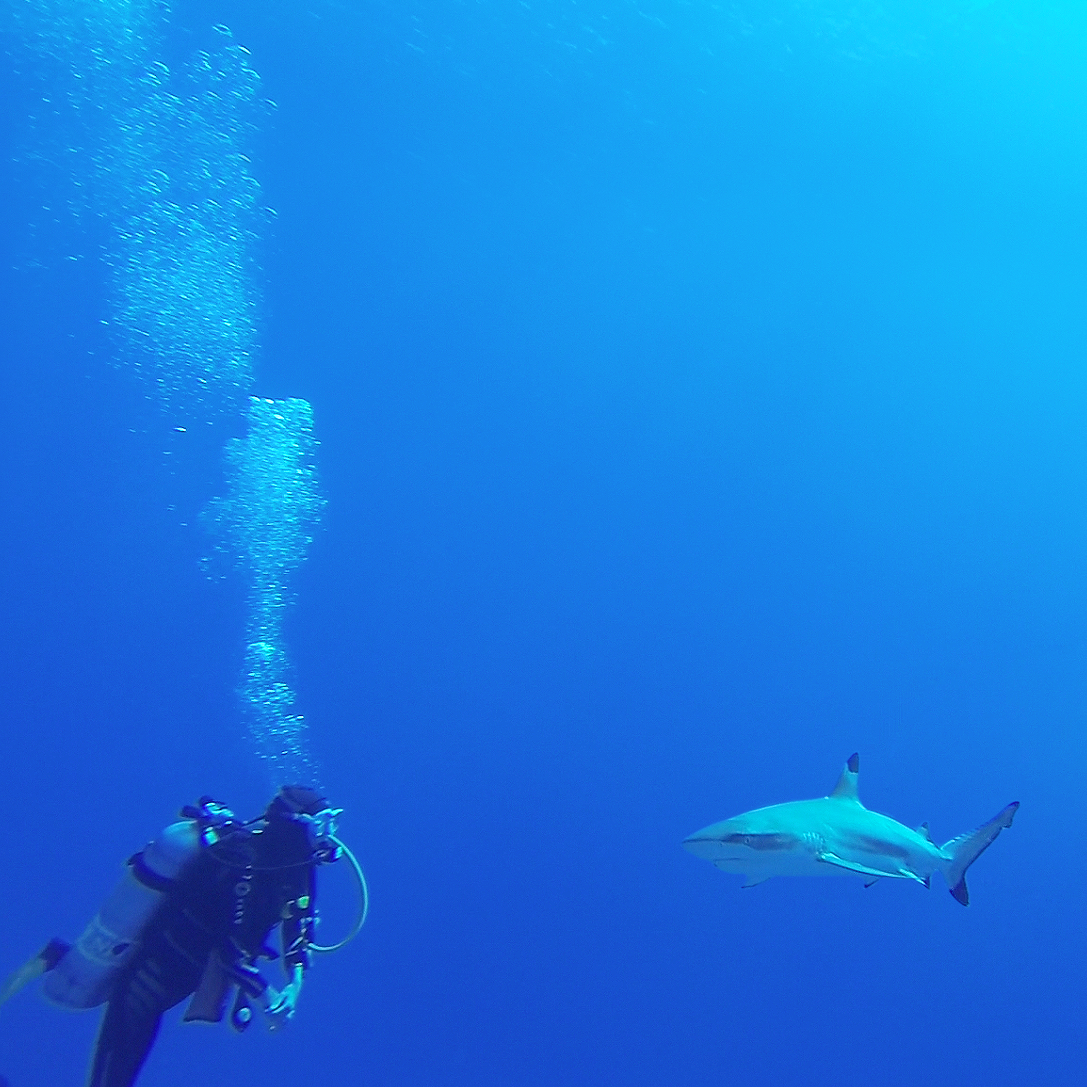 garrett gee - shark tank