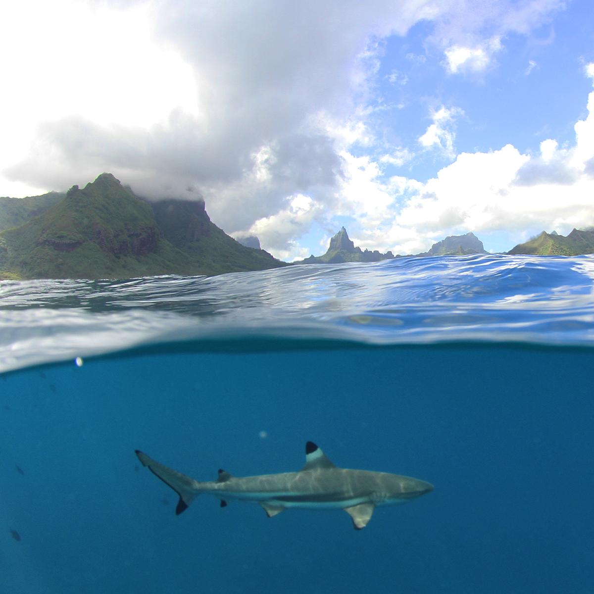 underwater photography tahiti