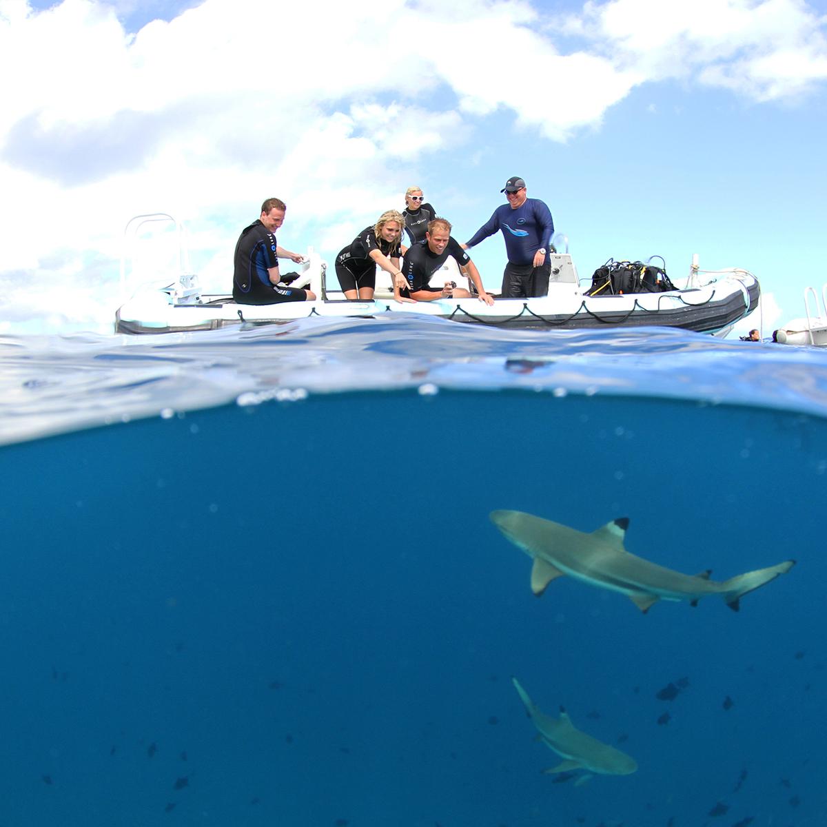 spl underwater photography
