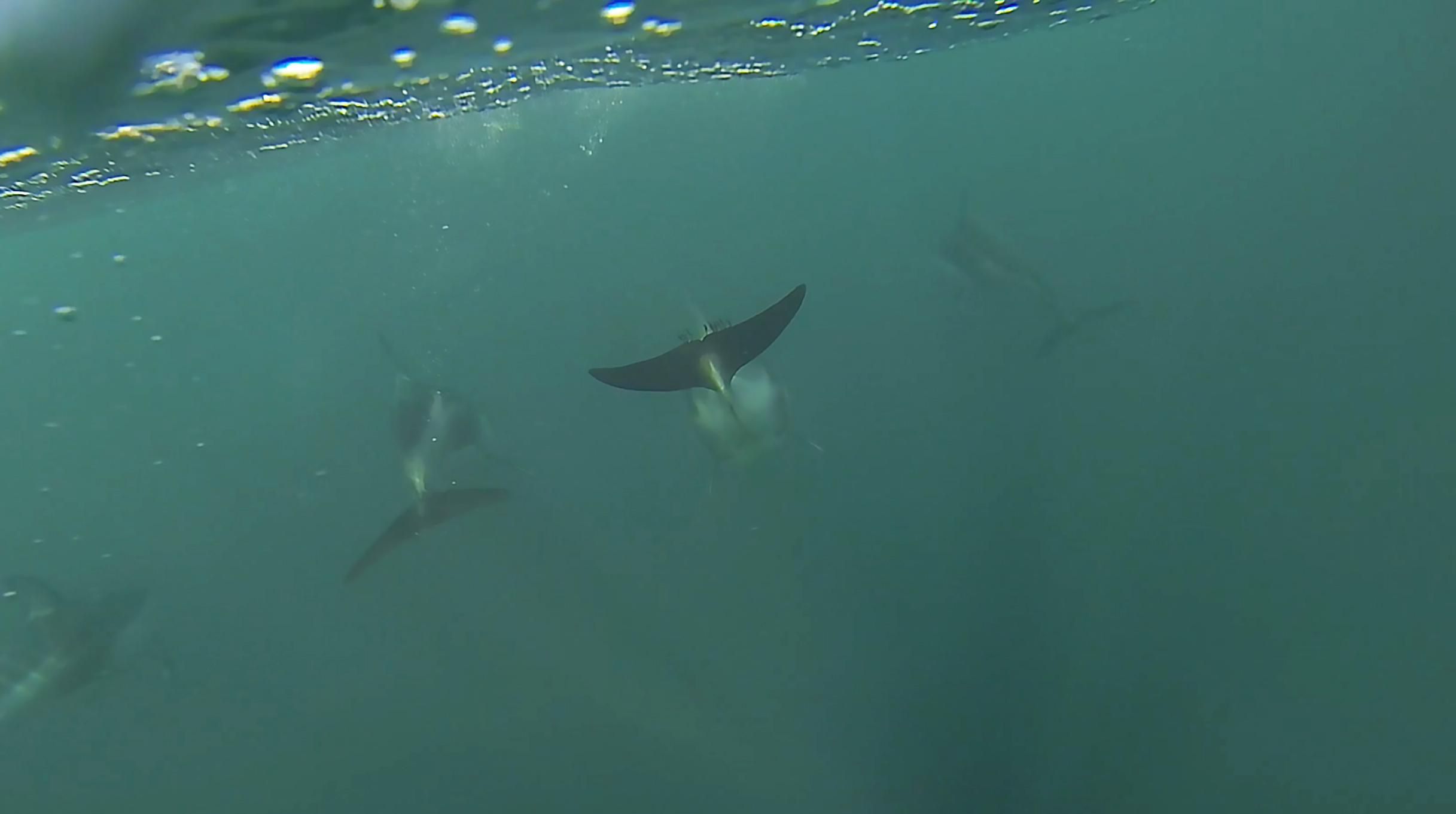 garrett-gee-dolphins